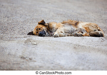 Stray dog laying on the pavement of the street.