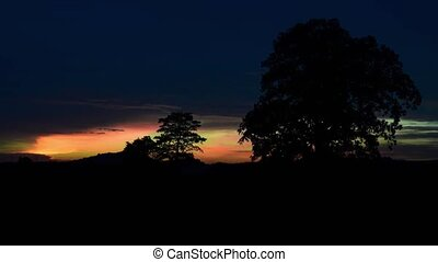 Sunset and big tree at mandioc plantation, Timelapse