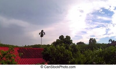 After rain time at rubber plantation, Timelapse - After rain...
