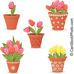 collection of tulip planted in ceramic pots for your design