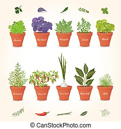 organic gourmet collection of different herbs planted in ceramic