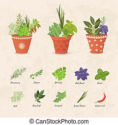 rustic collection of different herbs planted in ceramic pots and