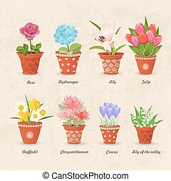 vintage collection of planted different lovely flowers in...