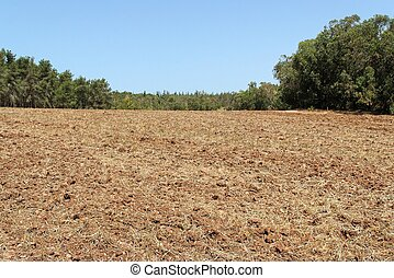 Plowed field with forest at the background