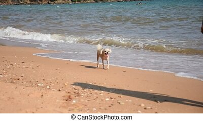 Woman hold the dog at beach - Asia woman plump body in...