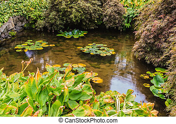 Little pond with lilies