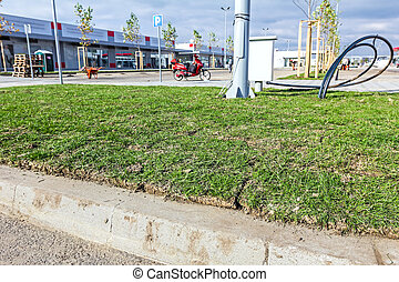 Unrolling grass, placed turf rolls on new lawn