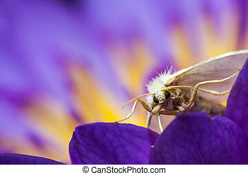 white moth on purple lotus