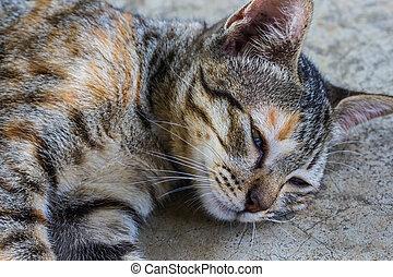 lazy cat sleep on the floor