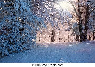 Perfect Christmas morning - Perfect winter Christmas...