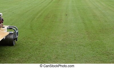 Restoration grass in a football stadium - Restoration the...