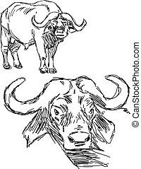 illustration vector hand drawn of Cape buffalo isolated on...