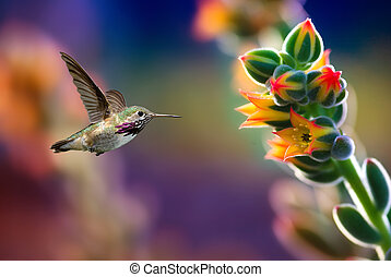 Small hummingbird near flowers frozen in action -...