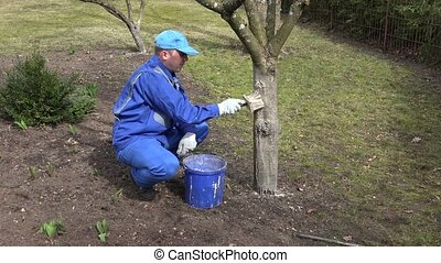 Young gardener careful whitening his garden trees ant touch...