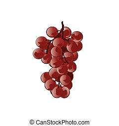 Red grapes. Vector illustration.