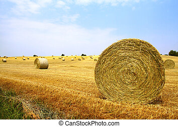 Balls on the field - Landscape of a field with balls of hay