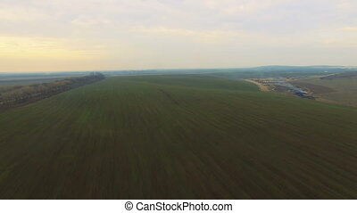 Aerial view of field with wheat