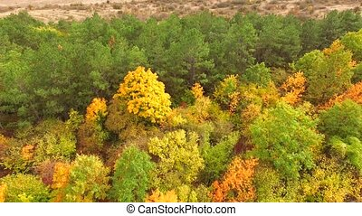 AERIAL VIEW Multicolored Trees In Park In Autumn - AERIAL...