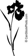 iris - vector iris silhouette