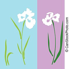iris white - vector iris flower