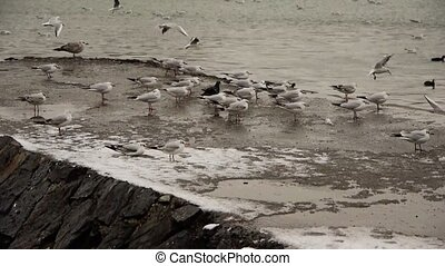 Winter harbour scene with gulls