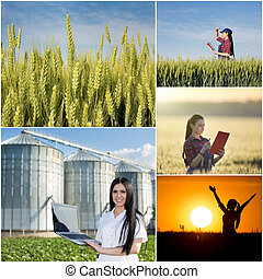 Collage of farming in wheat field - Food industry and...