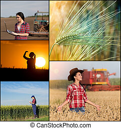 Collage of farming in wheat field