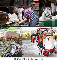 Collage of farm animals breeding - Farming and animal...