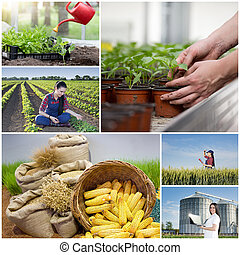 Collage of farming images - Food industry and farming...