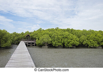 wooden bridge through mangrove forest - Walkway with wooden...