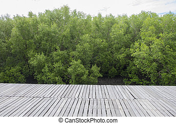 Nature trail in mangrove forest, Thailand