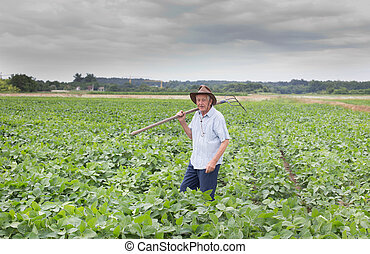 Senior peasant in soybean field - Agricultural and food...