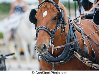 chestnut horse in carriage closeup portrait