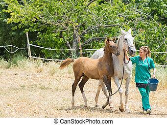 Veterinary on a farm - Veterinary I think feeding a horse on...