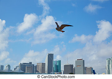 Miami downtown skyline with seagull flying Florida - Miami...