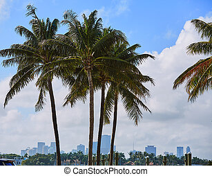 Miami downtown foggy skyline Miami Beach - Miami downtown...