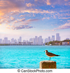 Miami downtown foggy skyline Miami Beach - Miami downtown...