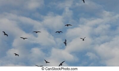 birds flying high in the blue sky - Many birds restlessly...
