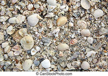 Florida Sanibel Island beach sea shells sand US - Florida...