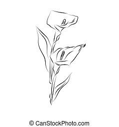 lily flower, sketch design, vector illustration