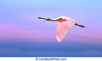 Pink bird against beautiful pink and blue sky panoramic view...