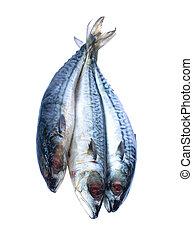 Image of fresh saba fish isolated on white background.