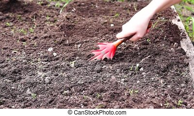 Hoeing soil with manual hoe - Preparation of gardenbed with...