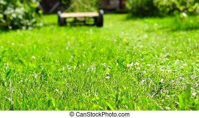 Gardener mows lawn with lawnmover