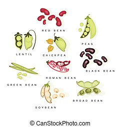 Bean Cultures With Names Set Flat Realistic Bright Color...