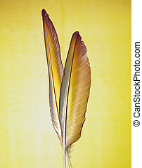 yellow feather - two nice feathers next to each other