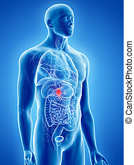 the gallbladder - 3d rendered, medically accurate...