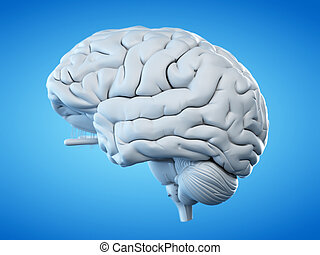 the human brain - 3d rendered, medically accurate...