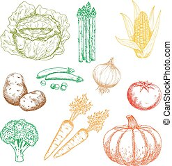 Autumnal organic farm vegetables colored sketches
