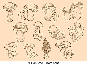 Fresh edible mushrooms engraving sketch symbols - Old...
